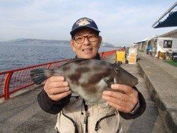 平磯海づり公園 ウキ釣りでウマヅラハギ