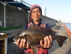 神戸市立平磯海づり公園 投げ釣りで年なしチヌ