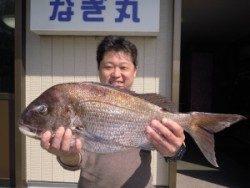 湯浅の磯でフカセ 真鯛、チヌ釣れました