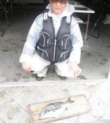 大磯にてフカセチヌの釣果