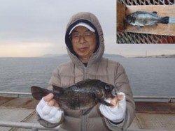 神戸市立須磨海づり公園 シラサエビのウキ釣りで尺メバル