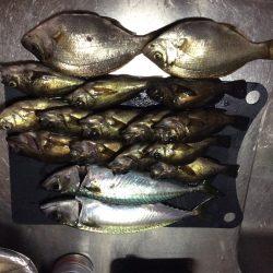 サビキでメバルと鯖の釣果