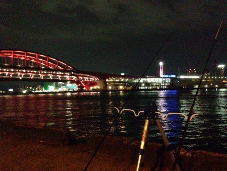 夜釣り釣果