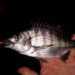 メバルチビばかりの五目釣り