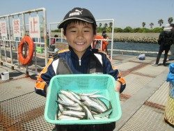 尼崎市立魚つり公園 サビキの回遊がありました