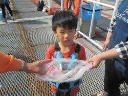 尼崎市立魚つり公園 サビキでイワシゲットです