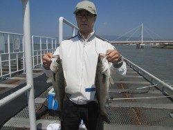 尼崎市立魚つり公園 ズボ釣りでハネの釣果