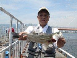 尼崎市立魚つり公園 内向きでハネの釣果