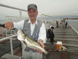 尼崎市立魚つり公園 ハネとチヌの釣果