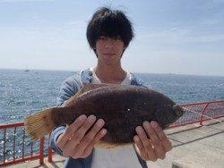 神戸市立平磯海づり公園 アオムシをエサにカレイ37cm!