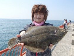神戸市立平磯海づり公園 カレイ37.5cmをゲット!