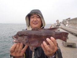 神戸市立平磯海づり公園 ウキ釣りでコブダイ37cm