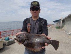 神戸市立平磯海づり公園 タイラバにヒラメ51cmがヒット!