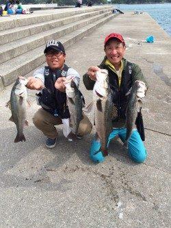 和歌山マリーナシティ海釣り公園 ノマセで良型シーバス4匹!