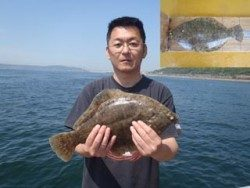 須磨海釣り公園 投げ釣りでカレイ42.3cm