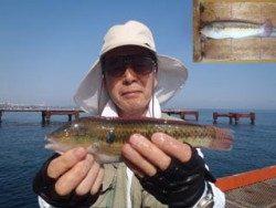 神戸市立須磨海づり公園 ウキ流し釣りでベラ24.3cm