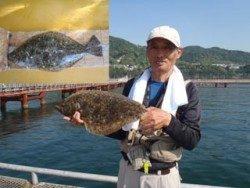 須磨海釣り公園 ヒラメ50cmの釣果
