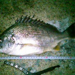 キビレ大漁