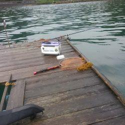 筏でアオリイカ