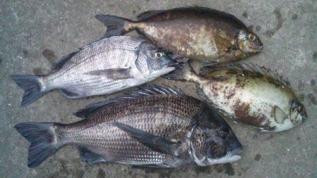 河口にてチヌフカセ釣り