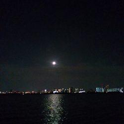 淀川チニング