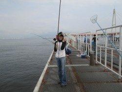 サビキ釣りで釣果が出るようになってきました!尼崎市立魚つり公園
