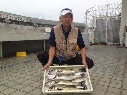 尼崎市立魚つり公園 サビキ絶好調! エビ撒きハネも釣果あり
