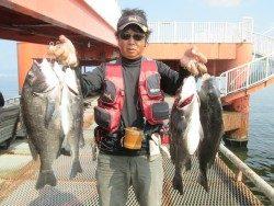 尼崎市立魚つり公園 チヌ、アジ好釣果