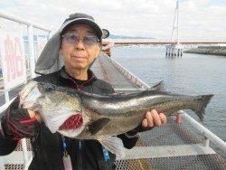 尼崎市立魚つり公園 エビ撒き釣りでスズキ66cm