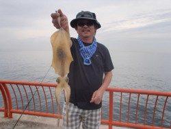神戸市立平磯海づり公園 パープルカラーのエギでアオリイカ800g