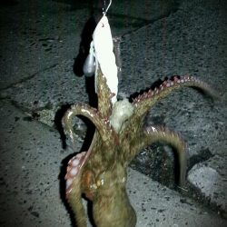 泉大津周辺タコ夜釣り