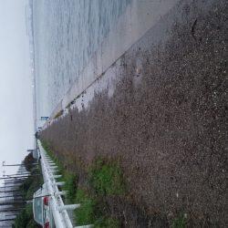 雨の常吉大橋