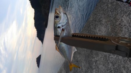 日本海アジング