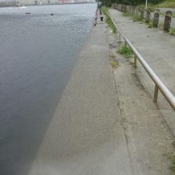 小松埠頭でタコ