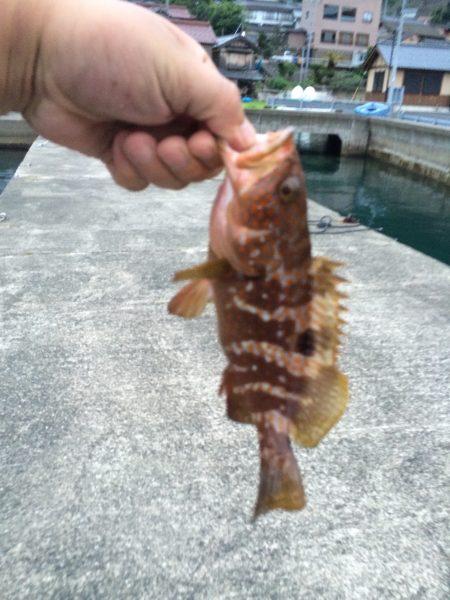 根魚とアジ