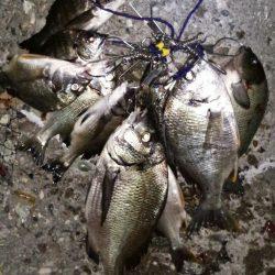 チヌ釣りに沖向きテトラに釣行