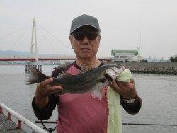 尼崎市立魚つり公園 エビ撒きでスズキ