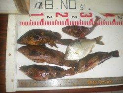 姫路市立遊魚センター シラサで五目釣り〜アイナメ・ガシラなど