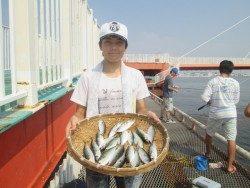 尼崎市立魚つり公園 アジがよく釣れています