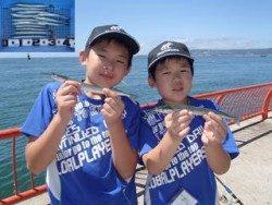 平磯海釣り公園 ウキ釣りでサヨリの釣果