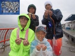 神戸市立平磯海づり公園 サビキでアジ75匹