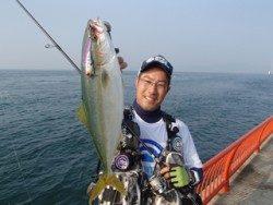 神戸市立平磯海づり公園 ルアーでツバス 37cm