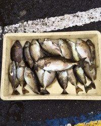 和歌山マリーナシティ海釣り公園 投稿