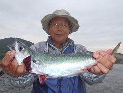 須磨海づり公園、ウキサビキでサバ40cm★