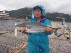 神戸市立須磨海づり公園 メジロ66cm