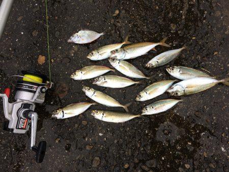 サビキで小アジ13匹と〈?〉な魚1匹