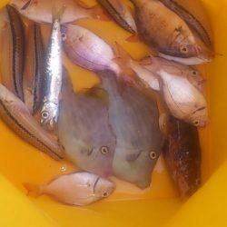 海釣公園イベントに参加しつつカワハギ狙い
