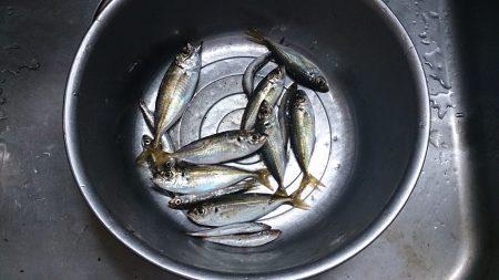 泉佐野食品コンビナートで飛ばしサビキ