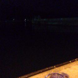 小島漁港エギング!