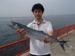 神戸市立平磯海づり公園 サワラ 67cm!